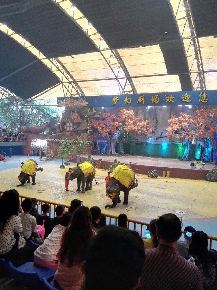 动物种类很多,动物表演和杂技表演超赞了