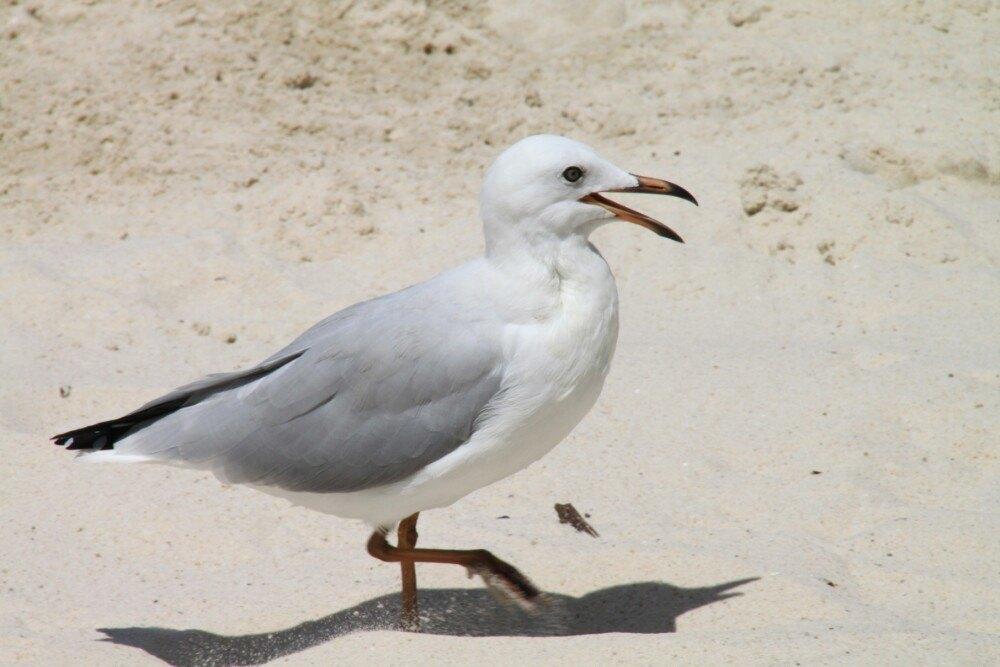 斯港野生动物栖息地景点