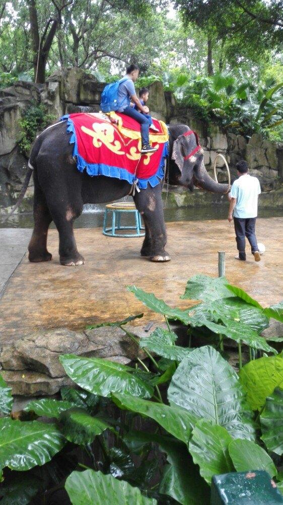 【携程攻略】广东深圳深圳野生动物园好玩吗