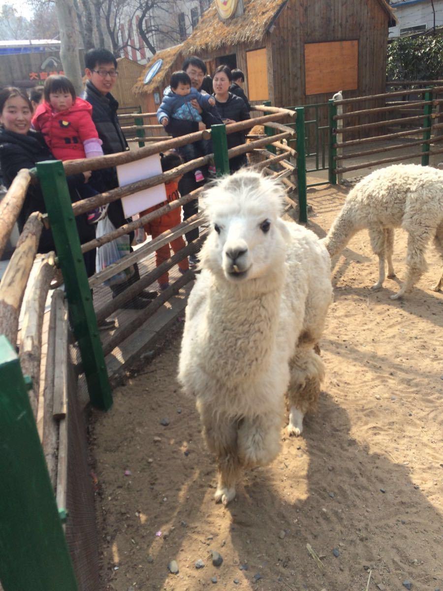 【携程攻略】河南郑州郑州动物园好玩吗