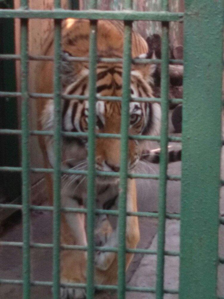 我昨天刚去过南京红山森林动物园,动物园里有大熊猫,狮子,老虎,大象
