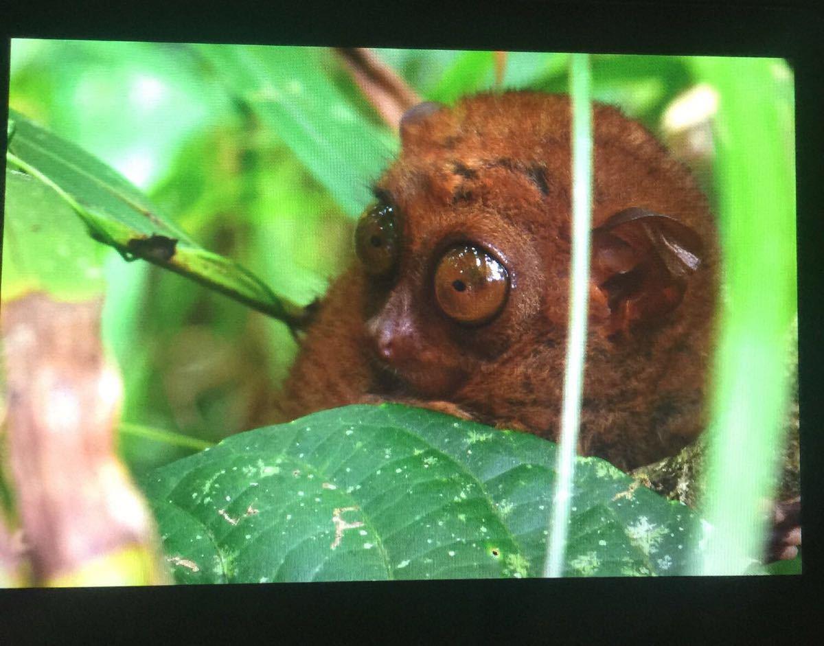 【携程攻略】薄荷岛眼镜猴游客中心景点,眼睛猴超级!