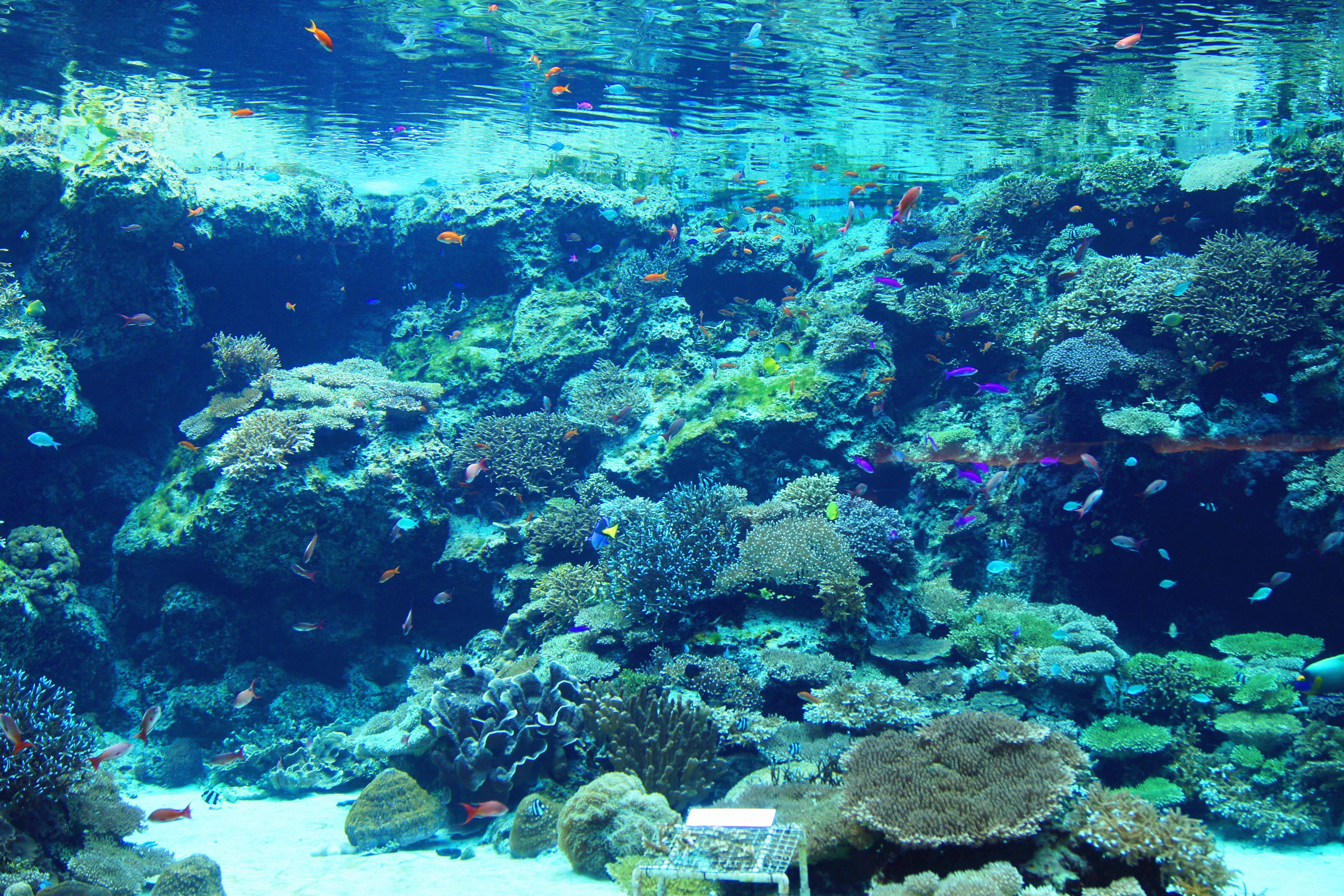 按照海洋生物的所属生活圈的深度,从浅海展馆逐渐走入深海展馆,感受不