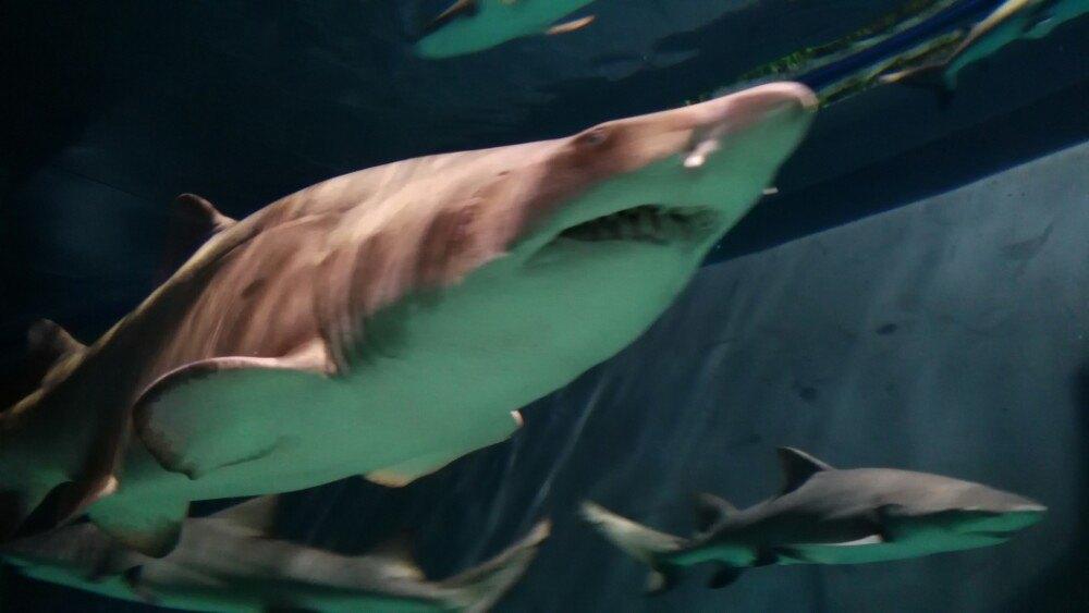 最厉害的海洋动物