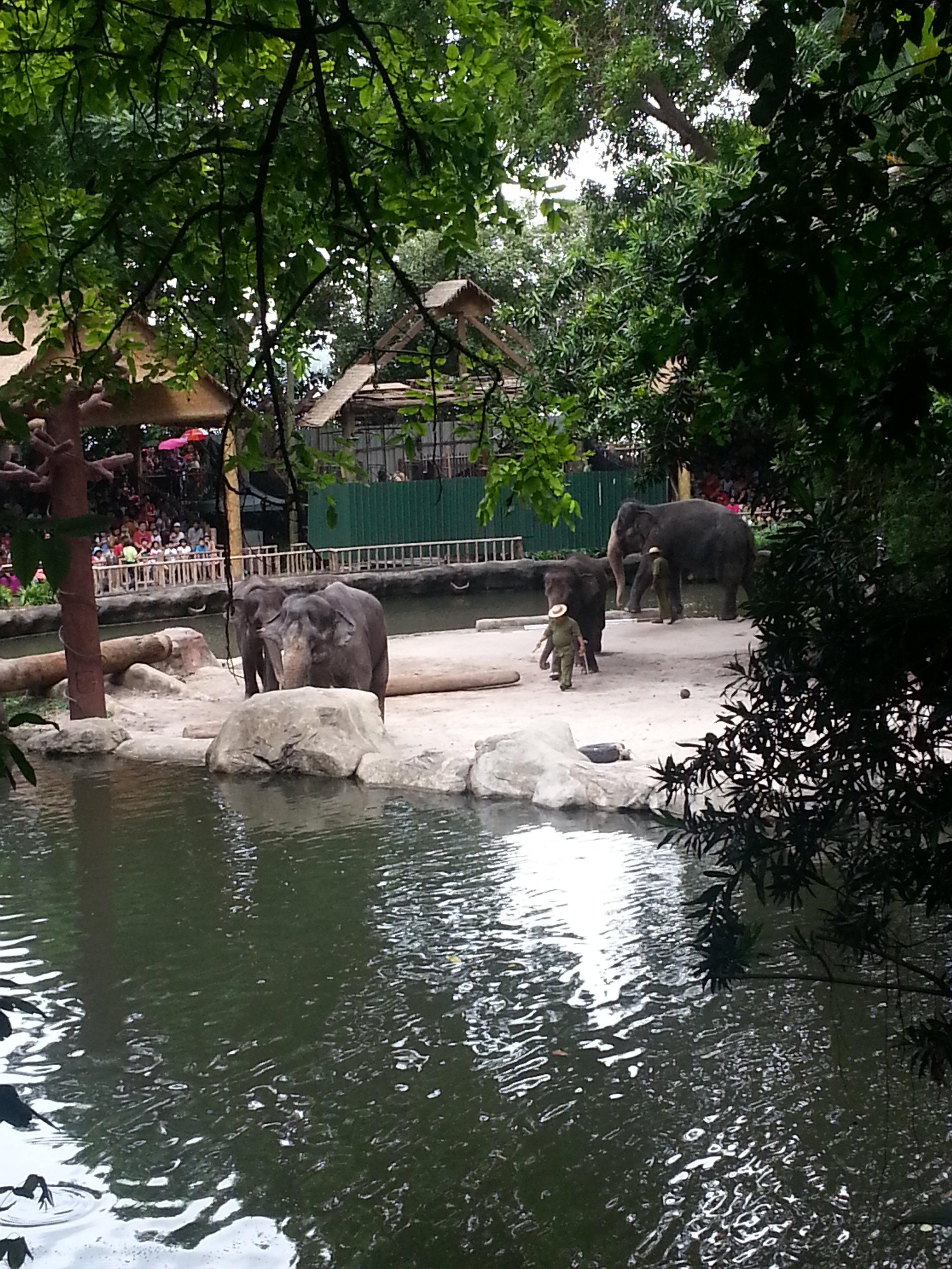 新加坡动物园采用全开放式的模式,是世界十大动物园之一。园内利用热带森林与湖泊等天然屏障代替栅栏,使我们可以不受铁笼的遮栏而看得一清二楚,各类动物在没有人为屏障的舒适环境下过著自由自在的生活,与游客和平共处。入园后记得向工作人员要地图(非常重要,有中文版)地图非常清晰直观的标明了各种动物的所在区域及动物表演的时间地点。拿到地图后应该合理规划下游览线路,以及要观看表演的时间。我们在这点上就疏忽了,首先没有规划好先去哪里,再者大家进到里面都有些兴奋,因为随处可见的小动物悠闲的在马路上散步或一抬头在头顶的树梢上又