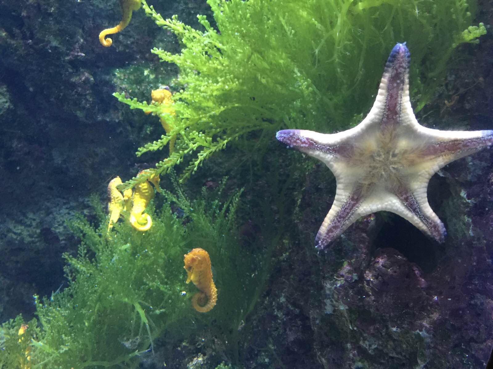 壁纸 动物 海底 海底世界 海洋馆 水族馆 鱼 鱼类 1600_1200
