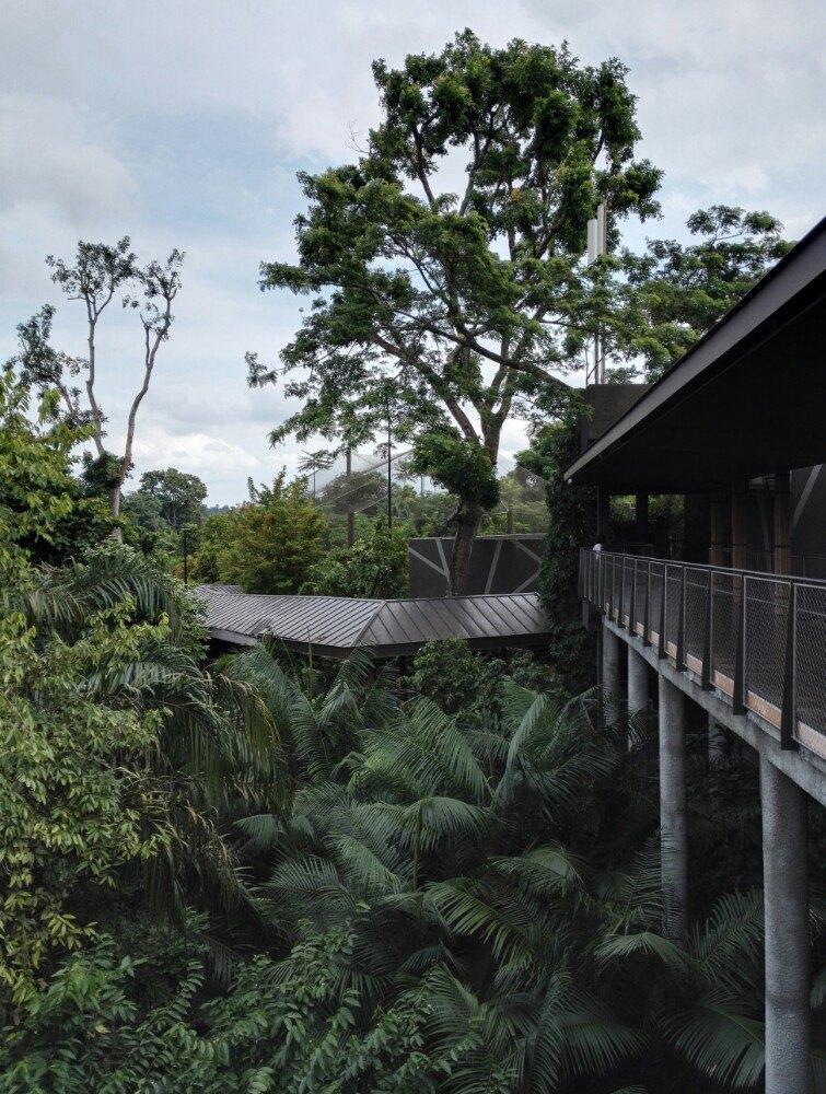 """避开需要徒步的""""新加坡动物园"""",选择旁边的""""河川生态园""""从熊猫馆出来"""