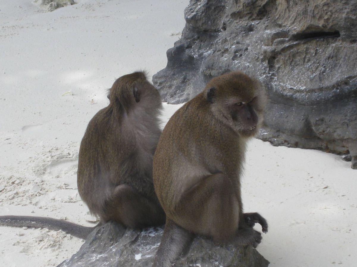 海滩常见动物图
