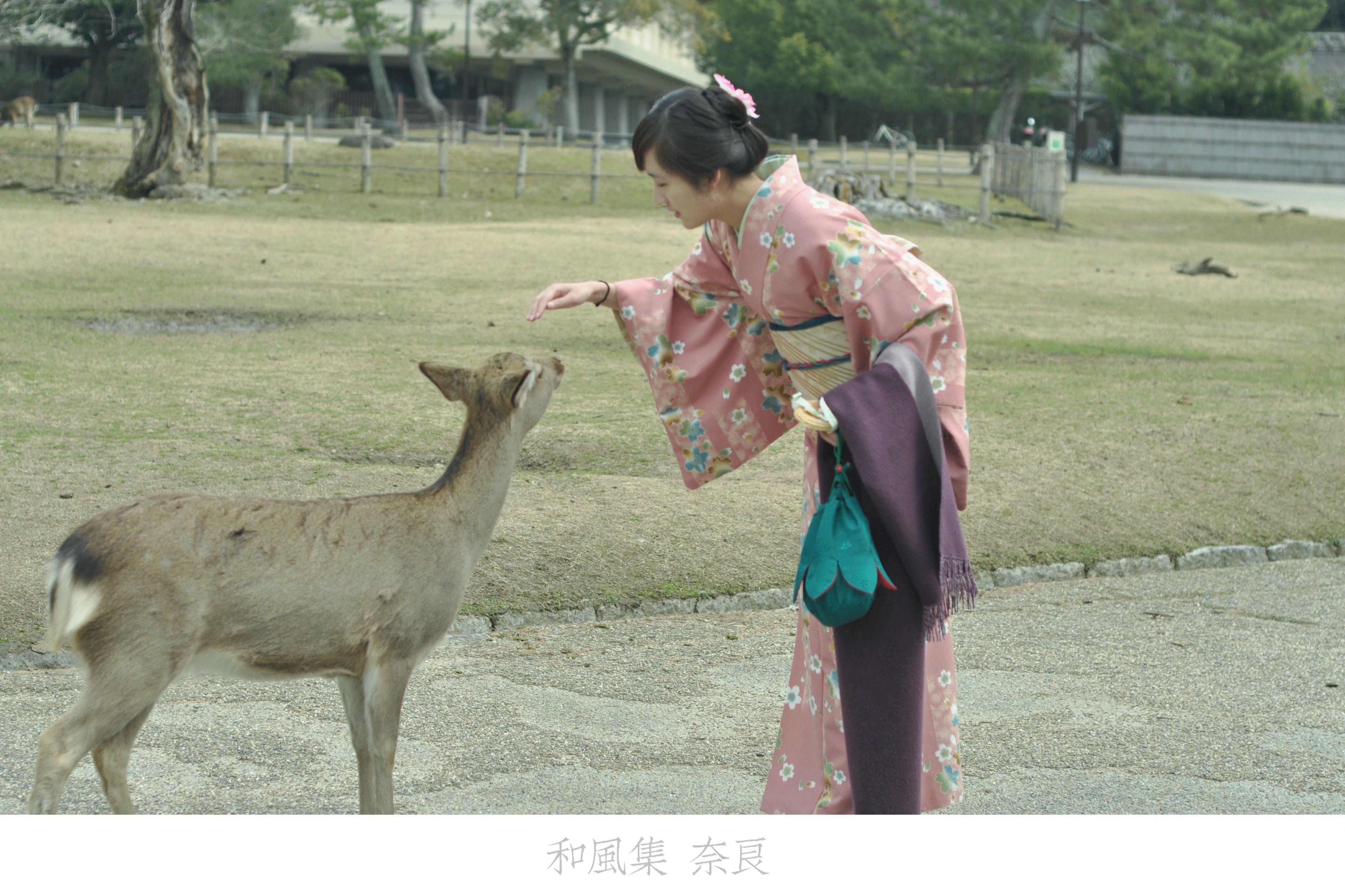 奈良公园虽然作为奈良最主力的景点又是各景点的中枢地带,游人自是不少,但架不住面积大啊,找个没人的角度并不难,最关键的除了红叶还有萌萌会鞠躬的小鹿鹿啊啊啊~~准备樱花季的时候再去看这里的一片粉红~~ 奈良每年还会举办丢掷鹿仙贝大会(看谁丢得远)、唤鹿聚集大会(吹奏贝多芬第 6 号交响曲召集鹿群)、以及切鹿角祭典(这个是从江户时代开始的传统祭奠,主要是出于安全考虑,鹿角虽然没有神经不会痛,但也是需要神职人员来制服的,据说场面激昂)~~ 另外,奈良公园还有大面积的草地,随
