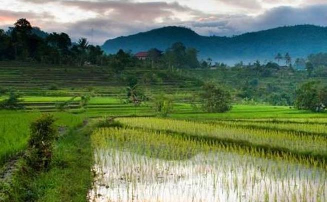 【携程攻略】巴厘岛德格拉朗梯田适合情侣出游旅游吗
