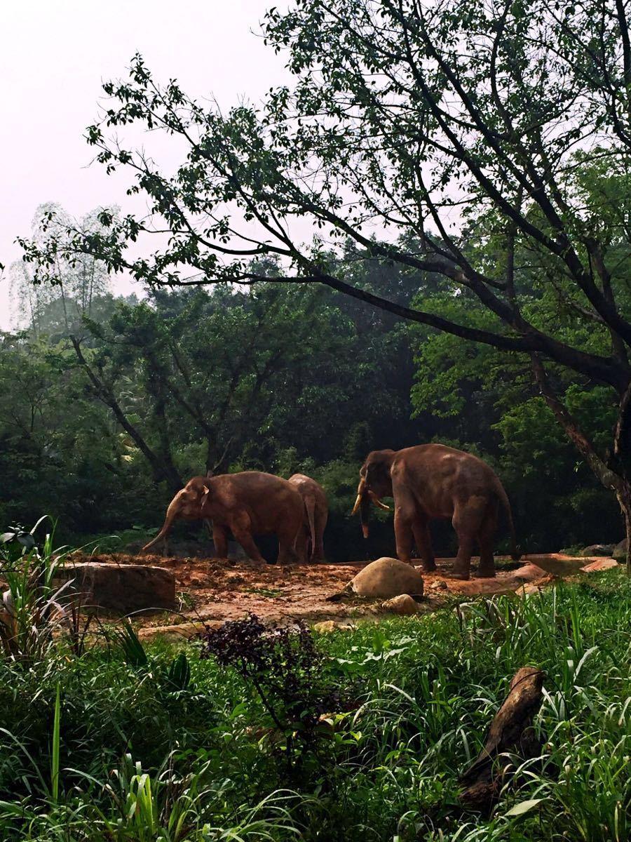 公园以大规模野生动物种群放养和自驾车观赏为特色,集动、植物的保护、研究、旅游观赏、科普教育为一体,拥有华南地区亚热带雨林大面积原始生态。        考拉、大熊猫、黄猩猩、亚洲象、食蚁兽等世界各国国宝在内的500余种20,000余只珍奇动物,拥有全国首创的自驾车观赏动物模式。剧场分为方舟剧场、大象剧场、河马剧场、花果山剧场等四大剧场。每个剧场不同时间都会有表演,大象剧场一定