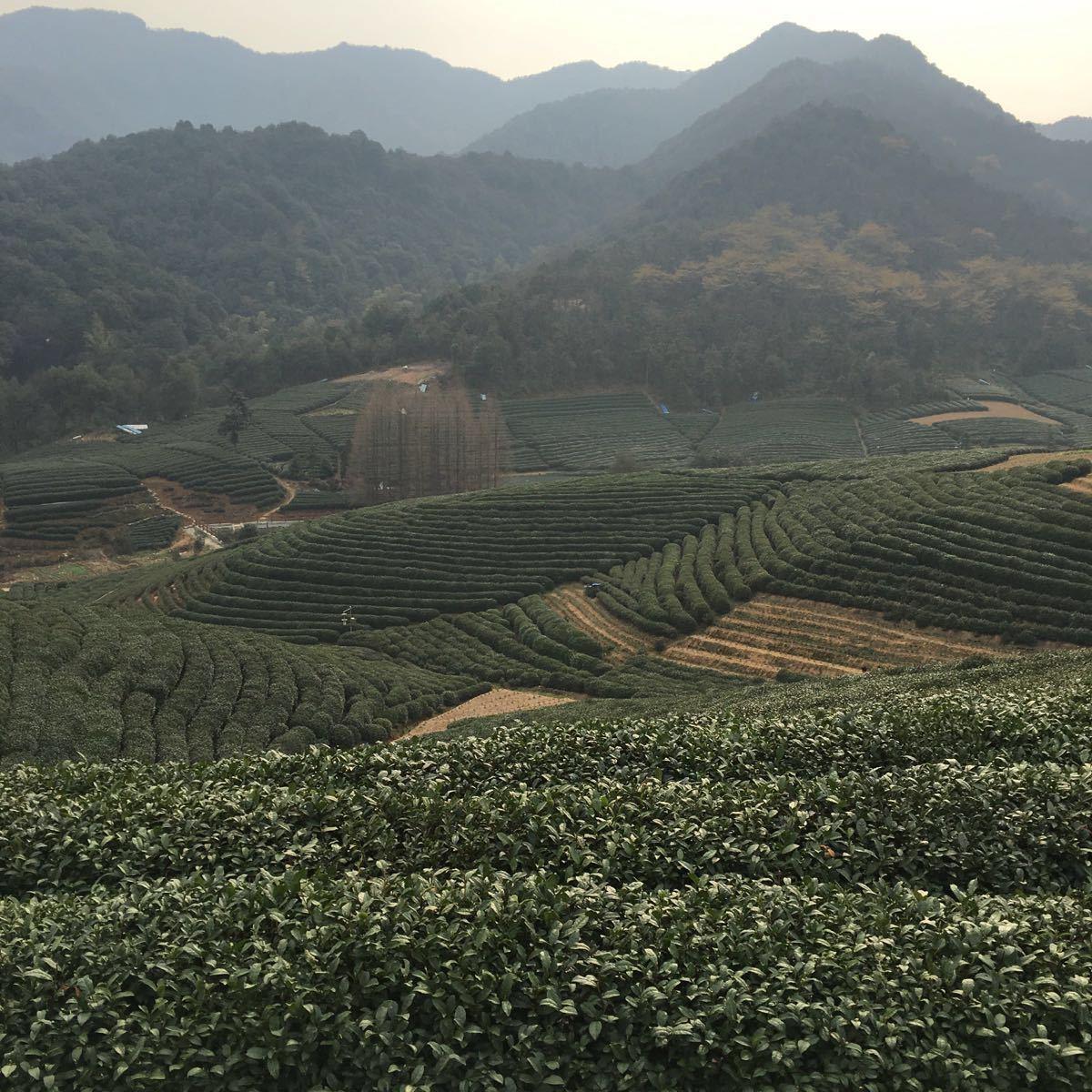杭州龙坞茶村