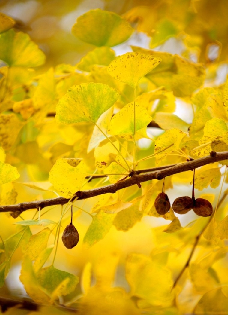 树叶手工贴画秋天海洋世界