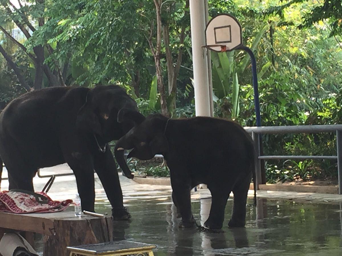 发现动物公园吧