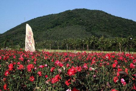 【携程攻略】三亚亚龙湾国际玫瑰谷好玩吗,三亚亚龙湾图片