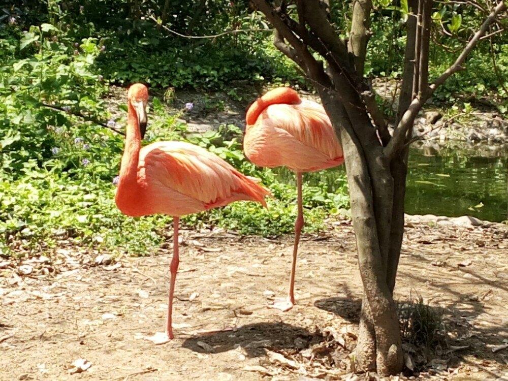 杭州动物园旅游景点攻略图