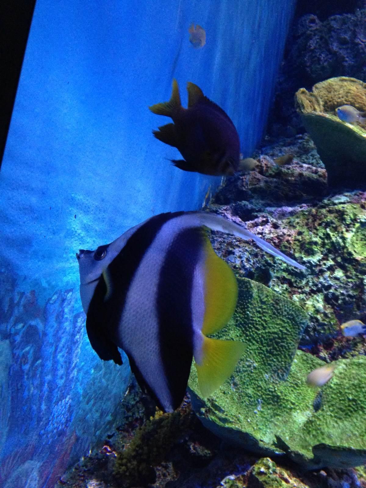 壁纸 动物 海底 海底世界 海洋馆 水族馆 鱼 鱼类 1200_1600 竖版 竖