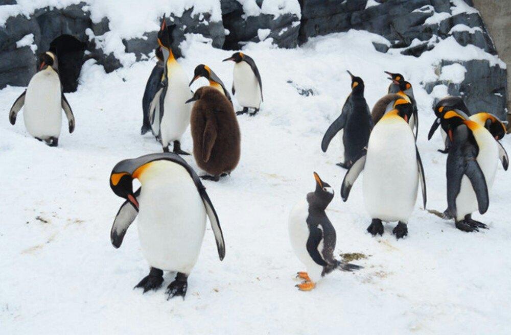壁纸 动物 企鹅 1000_656