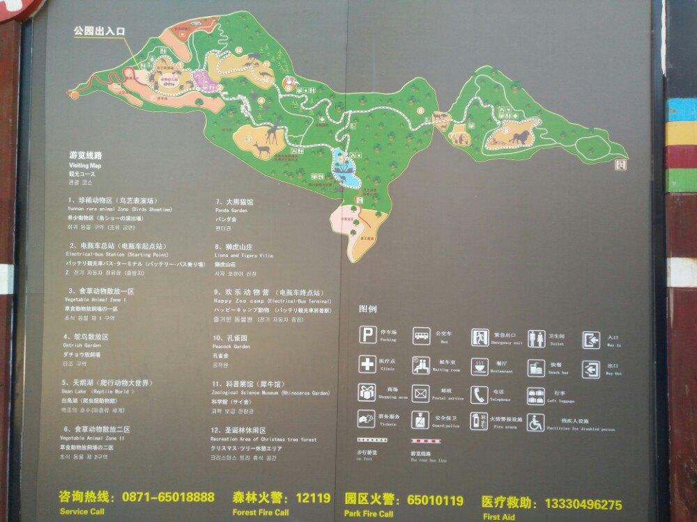 """红毛猩猩也叫红猩猩或人猿,与人类极为相近,基因相似度达到了96.4%,可以说""""差一点就成了人""""。 红毛猩猩原产于印度尼西亚 和马来西亚,全世界剩下不到三万只,属于濒危动物,如果不强力加以保护很快就会灭绝。 云南野生动物园这只可爱的红毛小星星快两岁了,是雌性。在它出生两个月时突然拉肚子,险些不治,饲养员李大姐把它单独饲养,精心照顾几个昼夜,它才转为为安,结果它再也离不开李大姐了,每天走哪."""