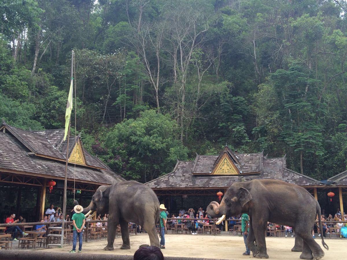不过在大象学校看到了,也不错,可惜下雨了,这里的大象好可爱好乖~ 20