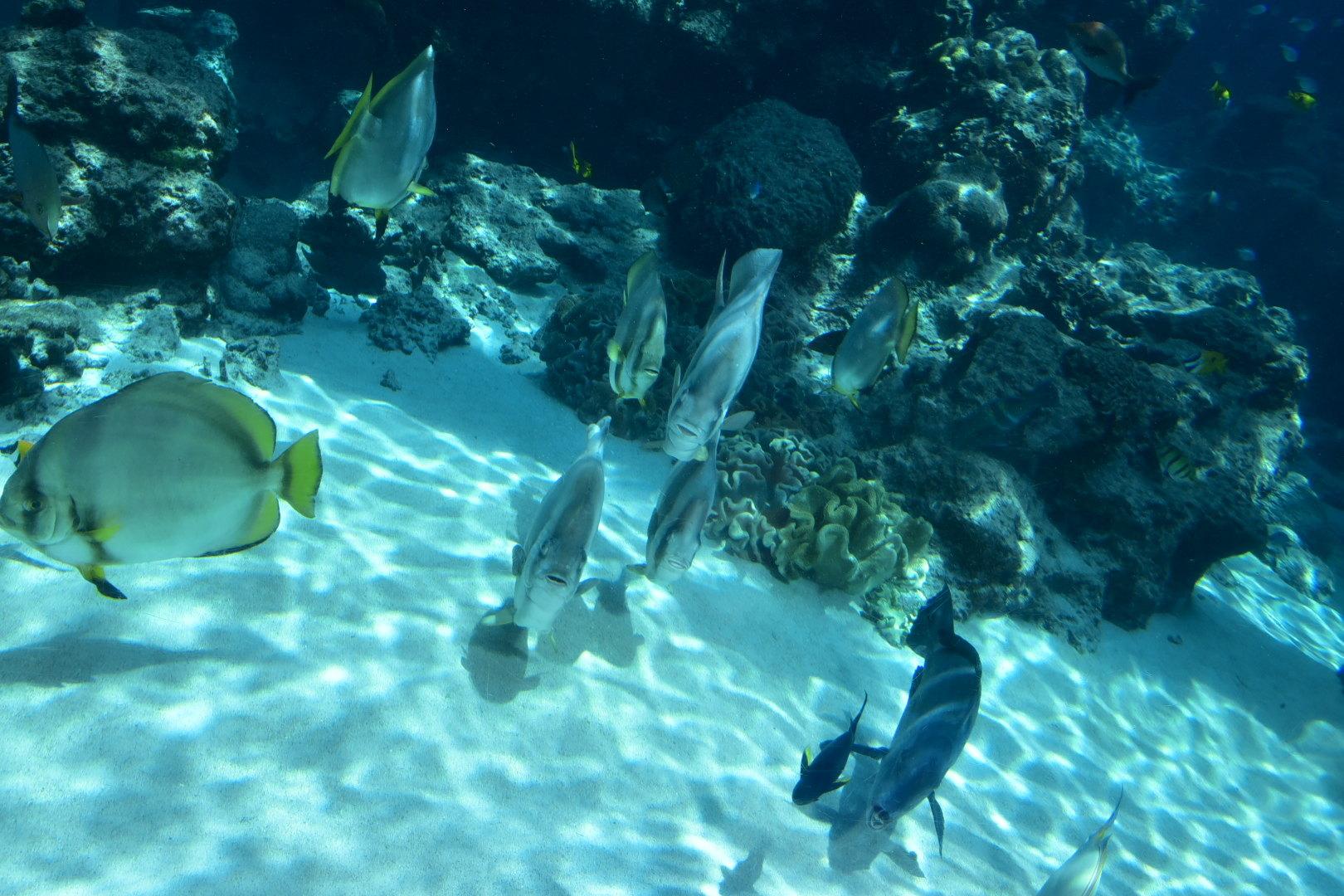 壁纸 海底 海底世界 海洋馆 水族馆 桌面 1620_1080