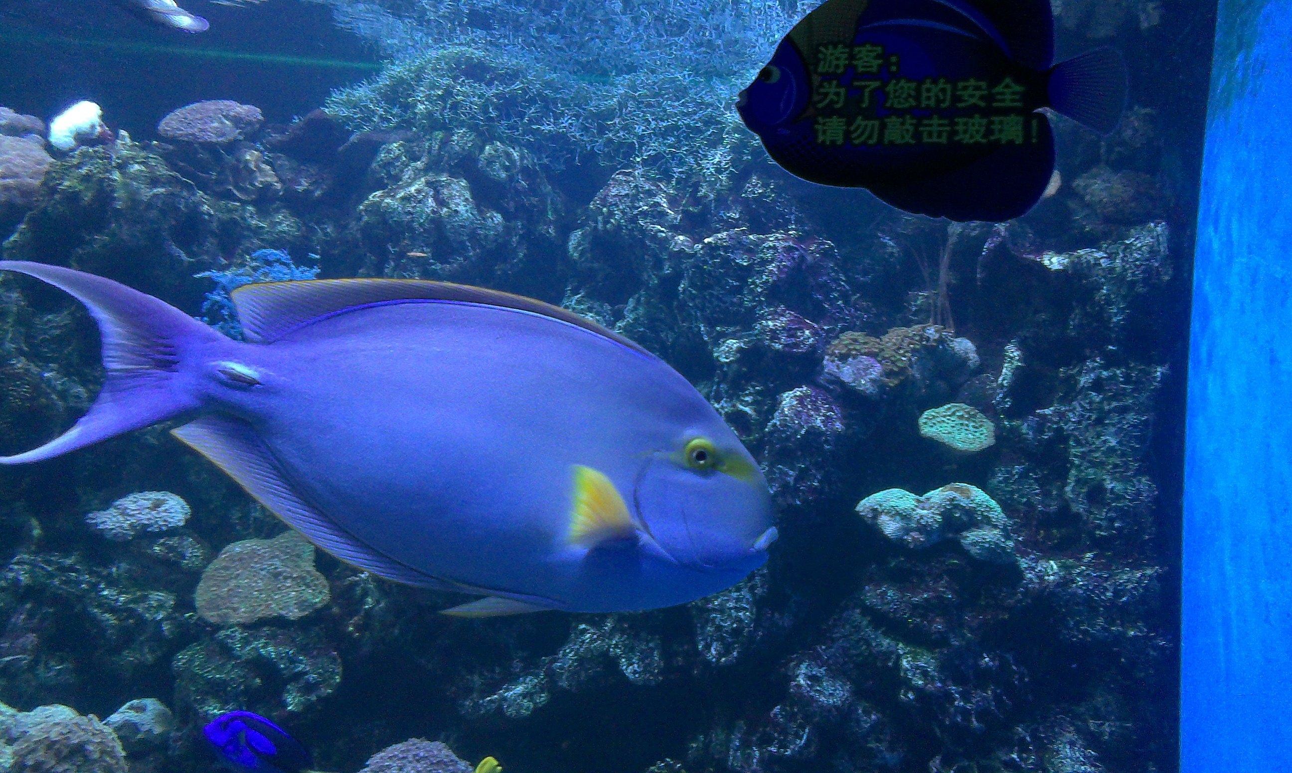 壁纸 动物 海底 海底世界 海洋馆 水族馆 鱼 鱼类 2592_1552
