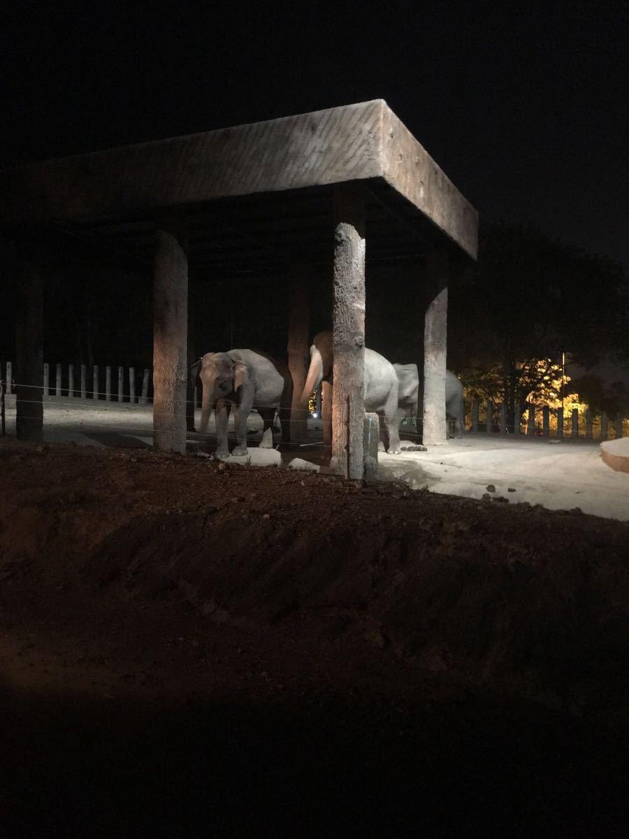 【携程攻略】清迈府清迈清迈夜间动物园好玩吗