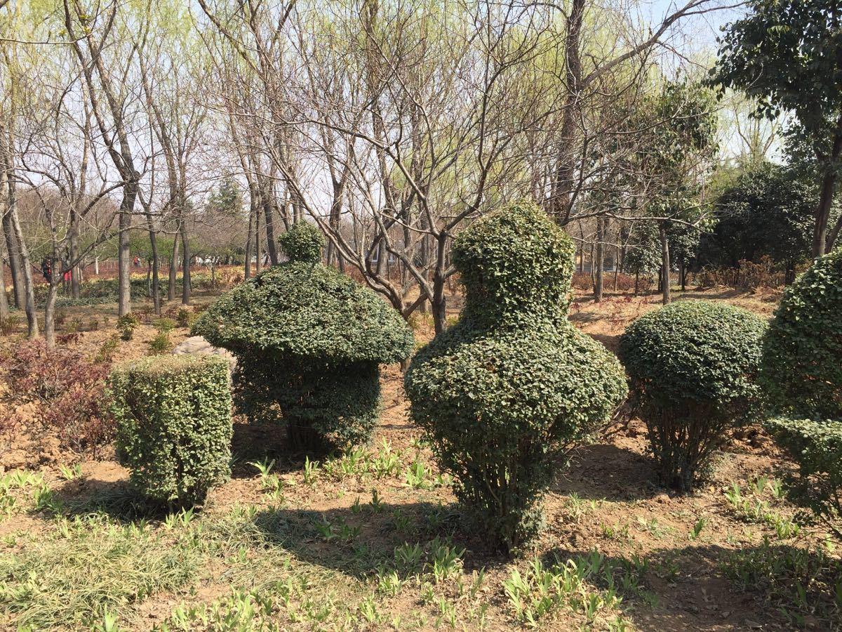 【携程攻略】河南隋唐城遗址植物园景点,春暖花开,拖