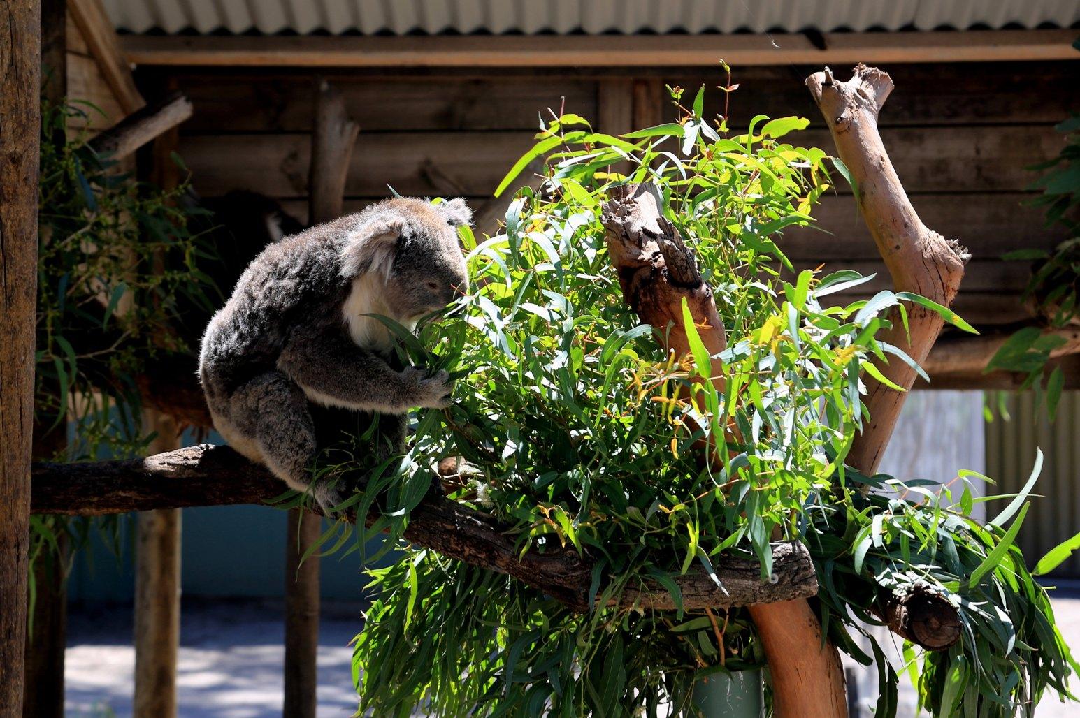 玛璐考拉和动物公园