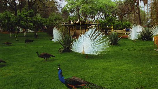 【携程攻略】昆明昆明动物园景点,昆明动物园又叫圆通