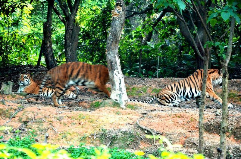 州长隆野生动物园