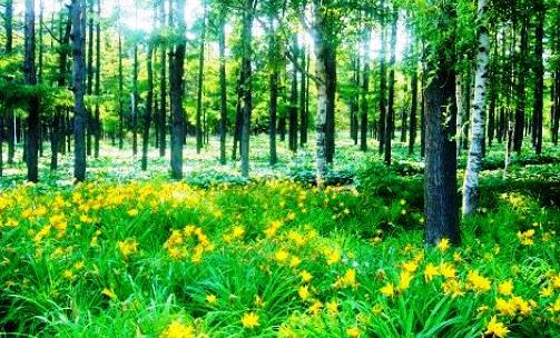 哈尔滨森林植物园