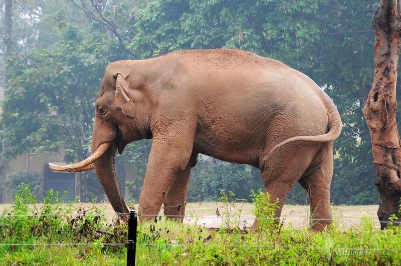 我和一头大象