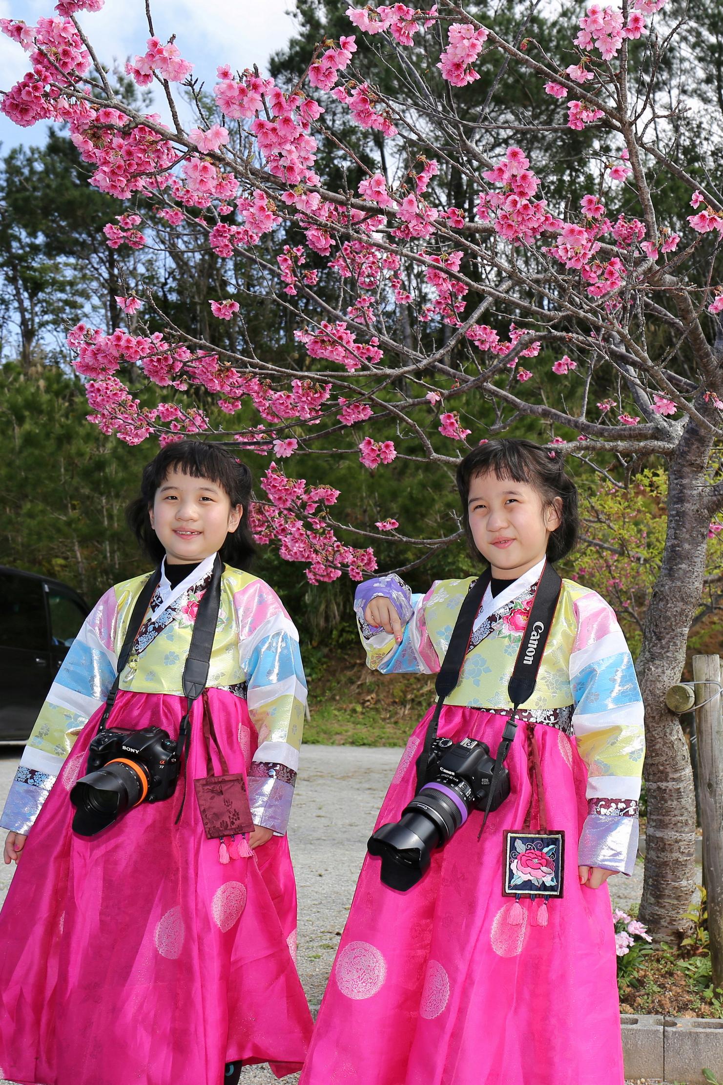 【随手拍!】穿韩服在日本拍樱花的双胞胎女孩