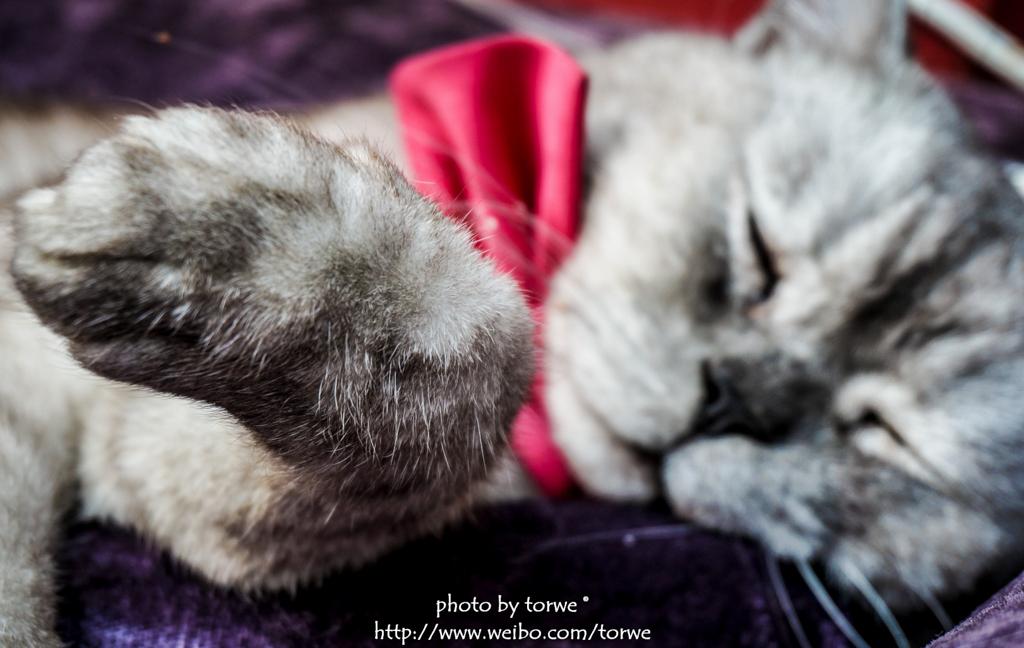 爪子爪子,爪子最可爱了 睡得一塌糊涂 懒猫们.