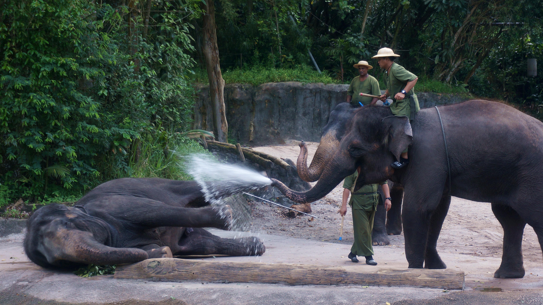 【携程攻略】新加坡新加坡动物园景点,世界十大动物园