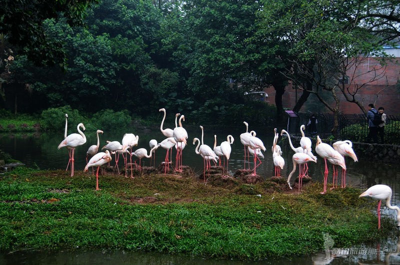 广州动物园:分享动物的快乐生活