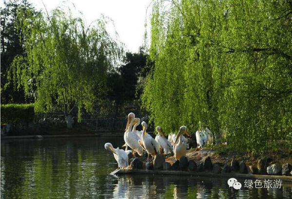 贵阳森林野生动物园位于贵阳市修文县扎佐镇贵州省扎佐林场内图片