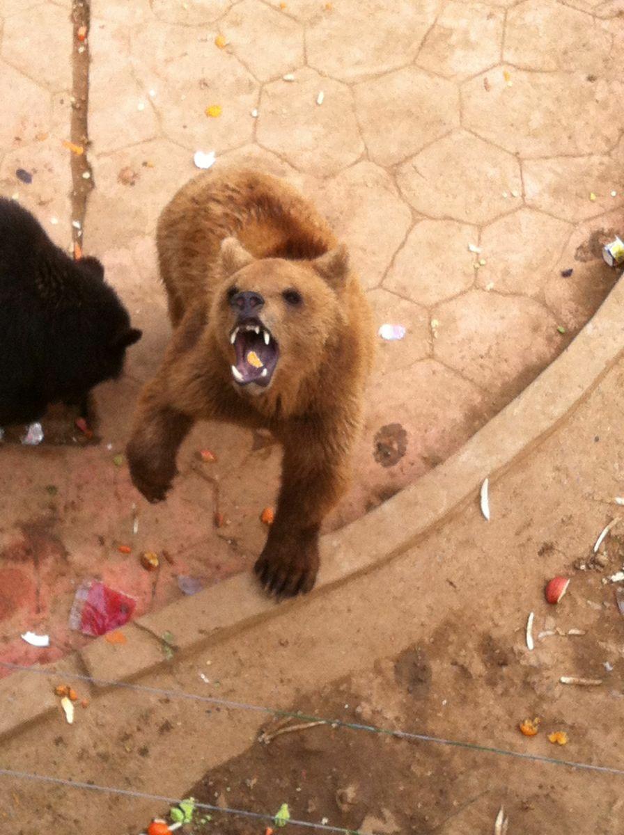 無錫動物園太湖歡樂園由兩部分組成,分別為動物園區和游樂園區。在動物園你可以看到黑熊、犀牛、大熊貓、孔雀等動物,在游樂園可以玩各種刺激的游樂設施,帶小朋友來此最合適不過。 動物園區分別布局了非洲草原區、亞洲食草動物區、靈長類動物區、猛獸區以及各種禽類展館等展示區。園區內生活著來自世界各地的珍稀野生動物100余種、1000多只。場館建設上充分考慮到野生動物的生態生長環境,讓動物回歸自然,讓游人體驗自然。 游樂園區設置了:動感火車、風火流星錘、激流勇進、極速風車、颶風飛椅、雙層轉馬、瘋狂戰車,七套國內一流的大型