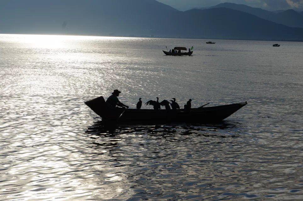 大理洱海鱼鹰驯化基地
