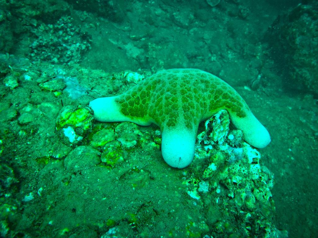 海洋棘皮动物图片大全