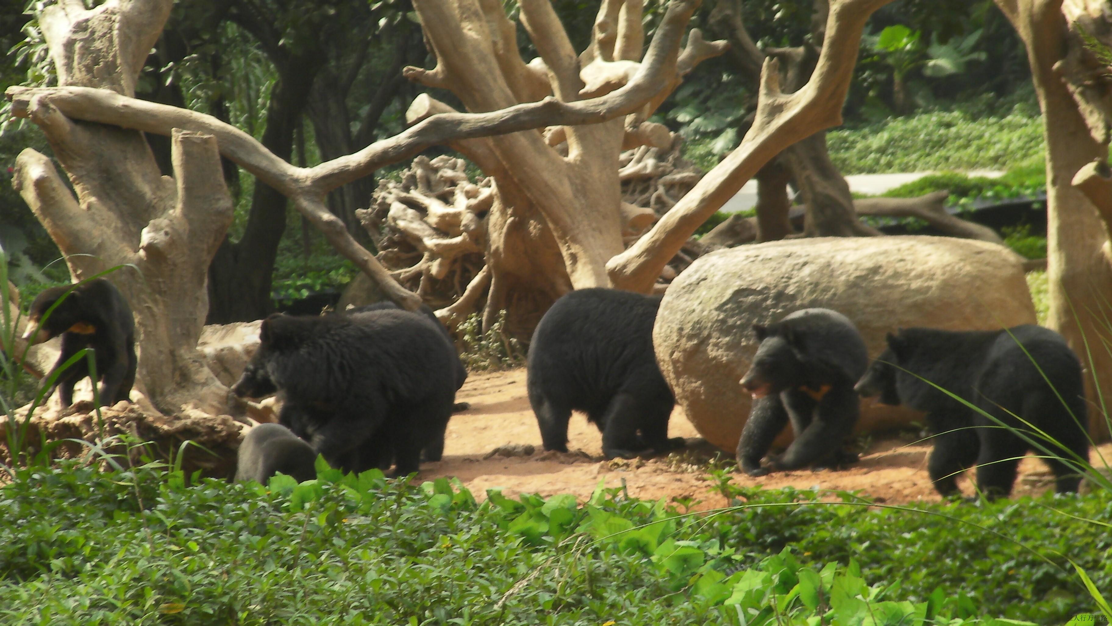 广州香江野生动物世界