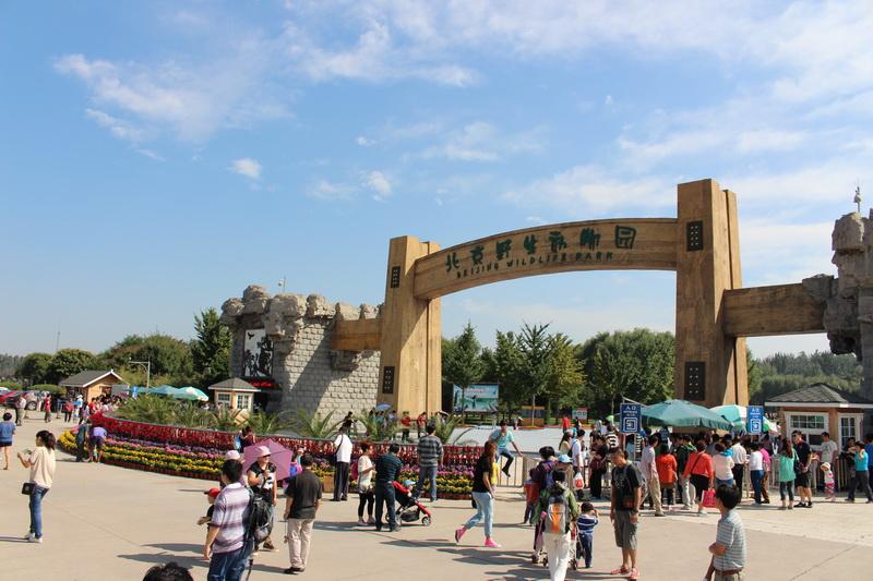 【i 旅行】北京野生动物园的快乐行