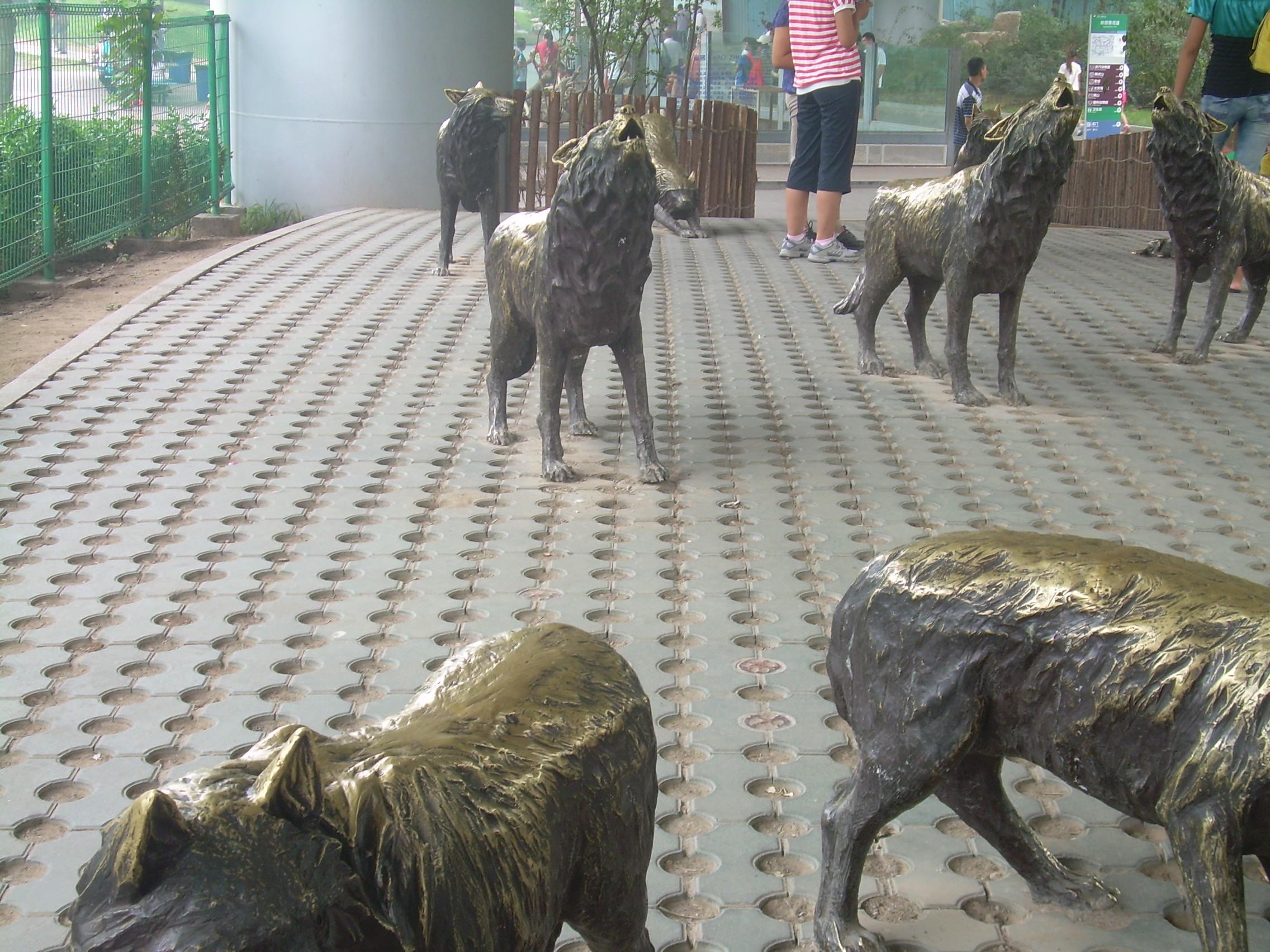 动物园里看狼