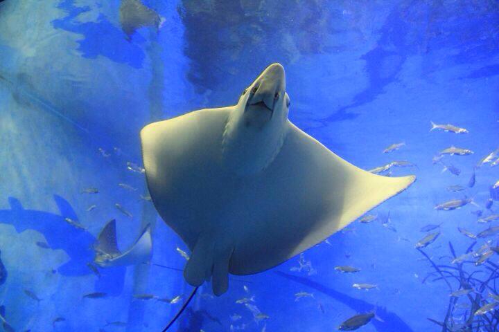 壁纸 动物 海底 海底世界 海洋馆 水族馆 鱼 鱼类 720_480
