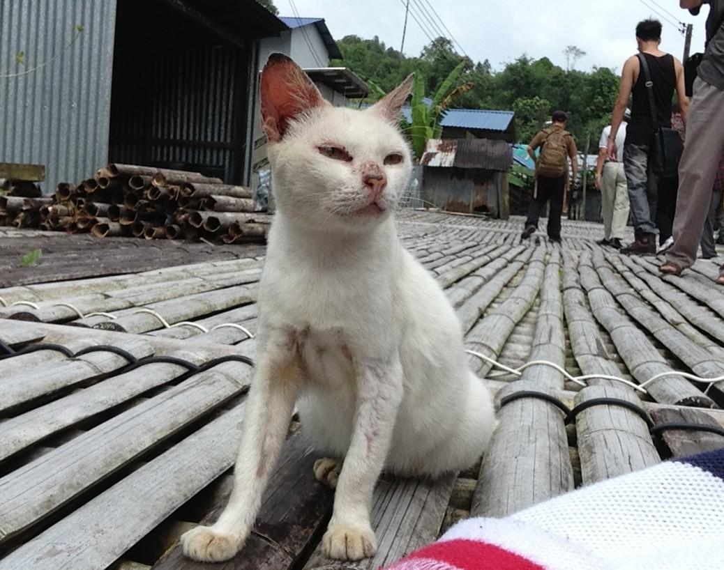 壁纸 动物 狗 狗狗 猫 猫咪 小猫 桌面 1038_818