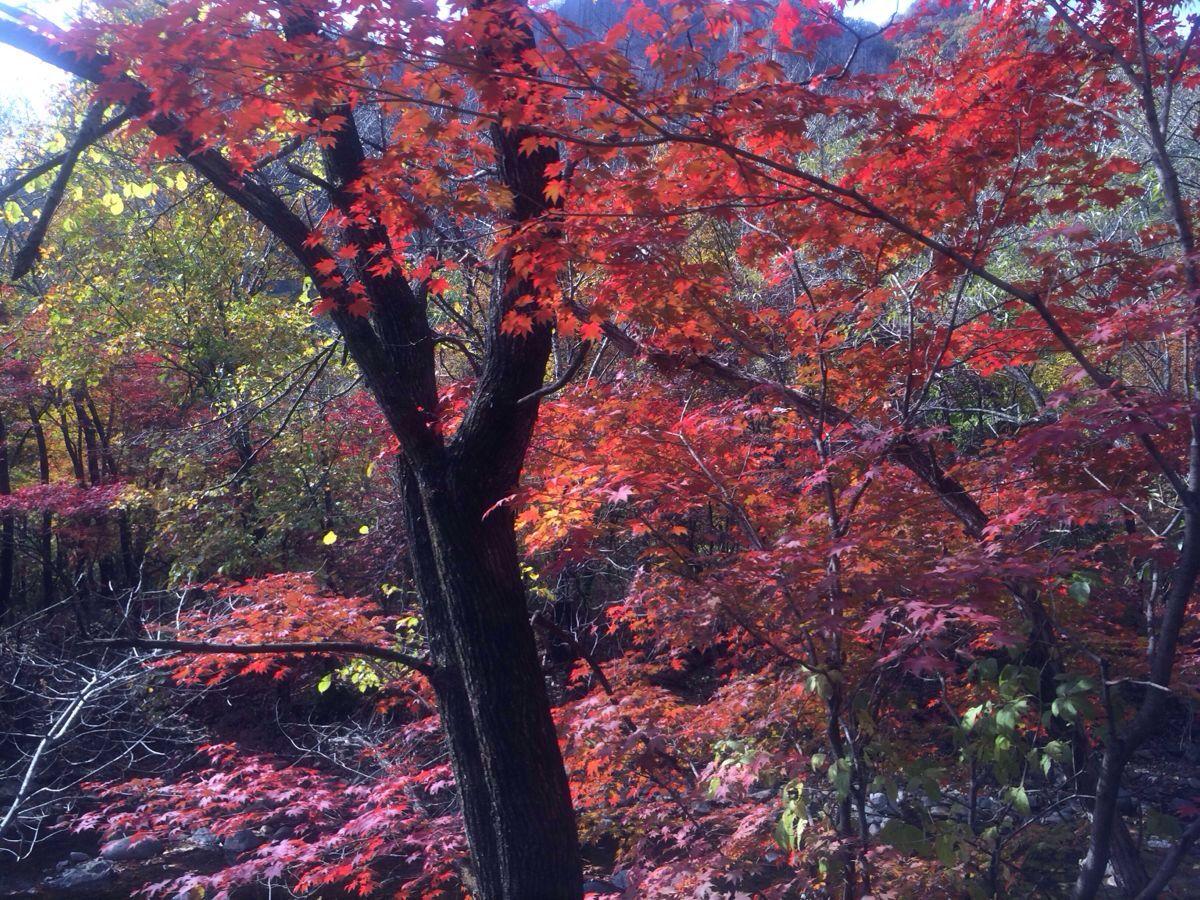 蒲石河森林公园图片