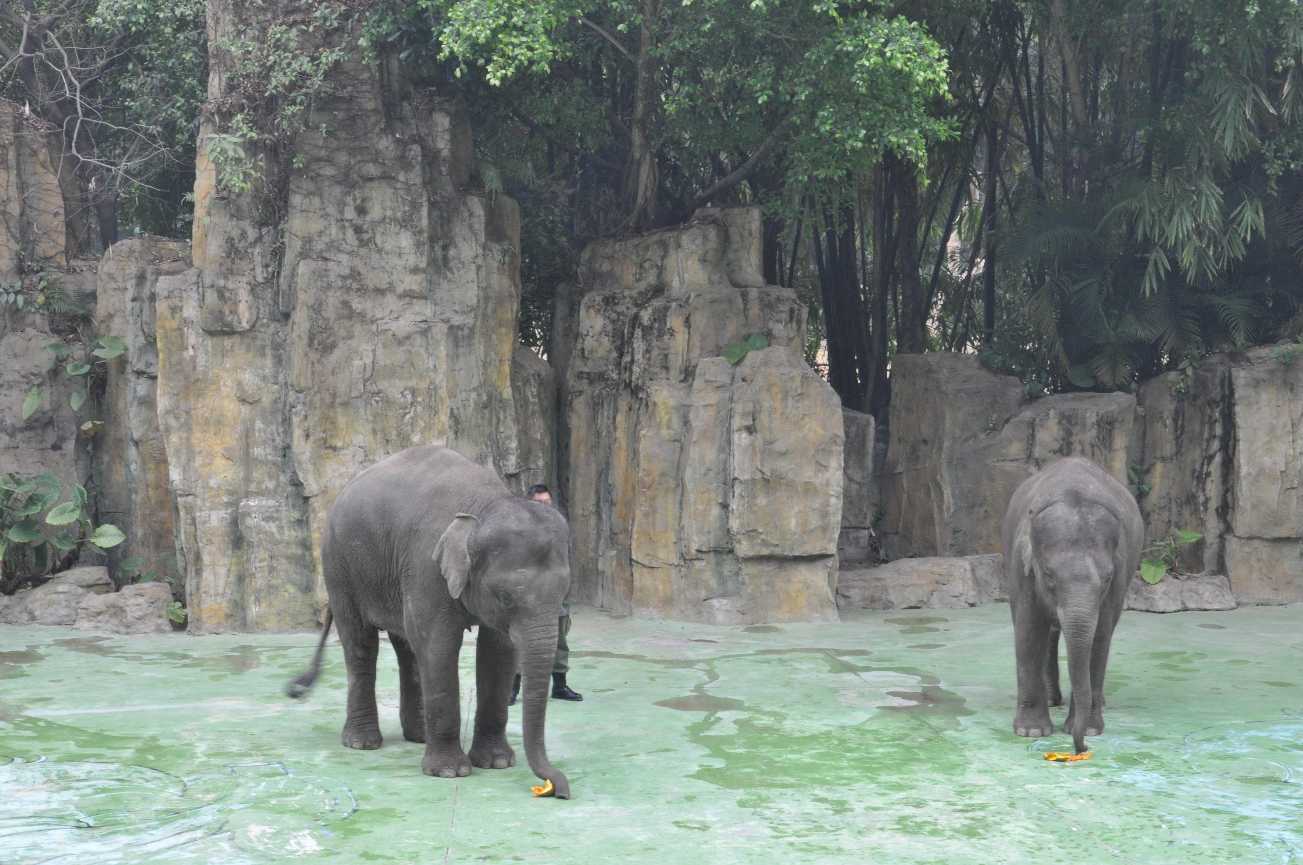 长隆野生动物园 - 广州游记攻略【携程攻略】