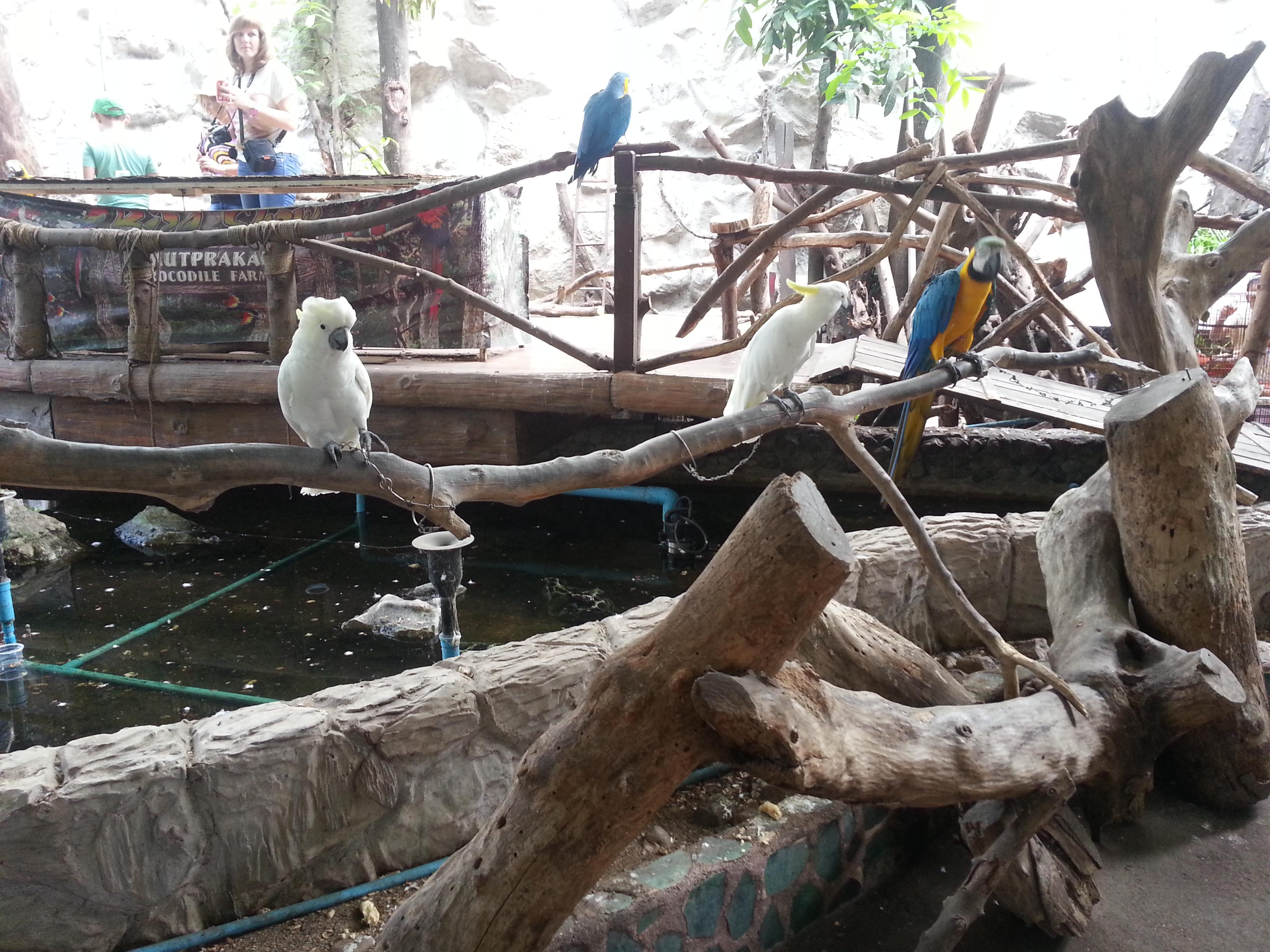 曼谷野生动物园,曼谷曼谷野生动物园攻略/地址/图片
