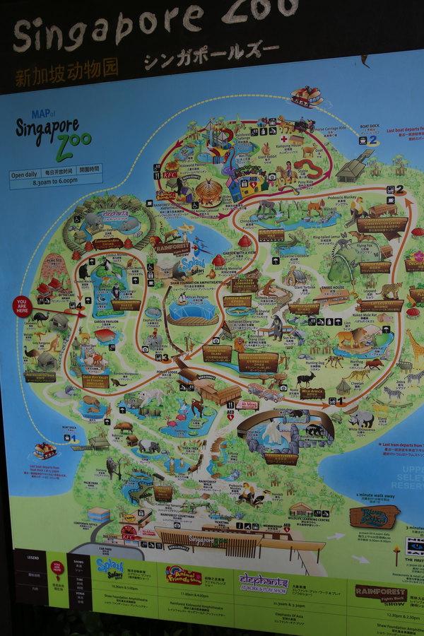 新加坡动物园是世界唯一提供此难得机会的